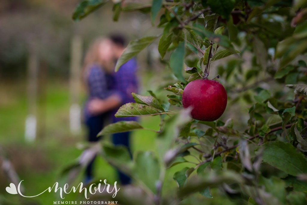 Apple Orchard Proposal