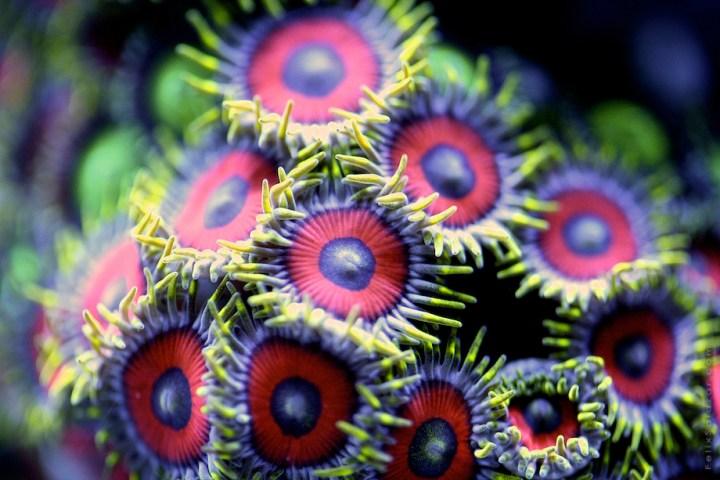 macro-corals-reef-felix-salazar3