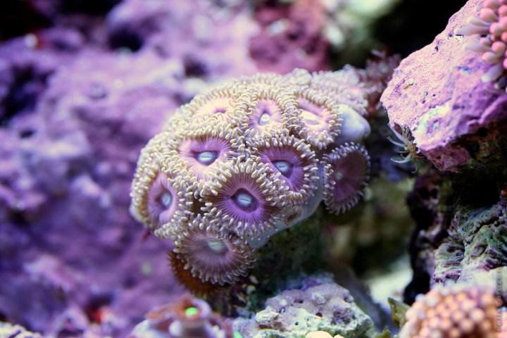 macro-corals-reef-felix-salazar8