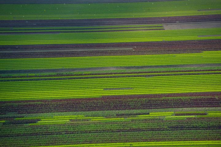 Field near Ely, Cambridgeshire