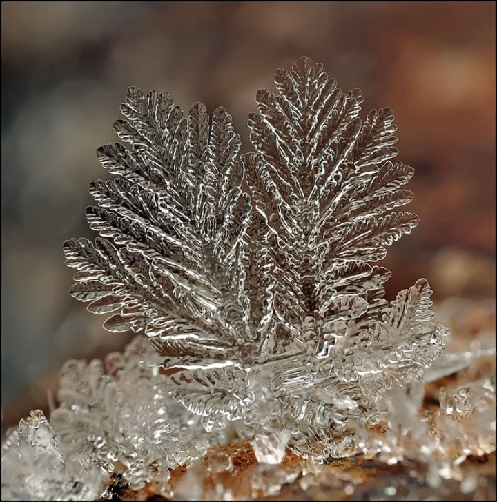 macro-photograph-of-a-snowflake-by-andrew-osokin-6