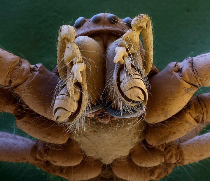 macro-spider-head-electron-microscope-oliver-meckes
