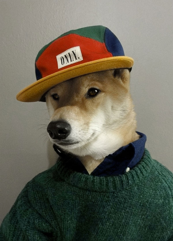 menswear-dog-dressed-in-clothes-fashion-look-book-8