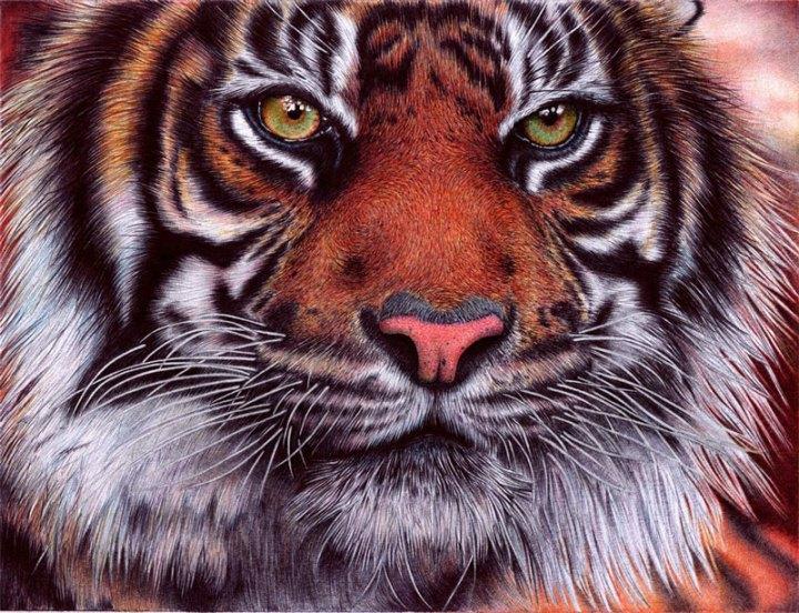 tiger___bic_ballpoint_pen_by_vianaarts