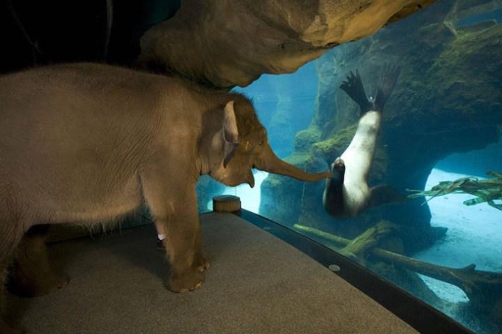 an-elephant-meets-a-sea-lio