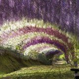 flower-tunnel-japan