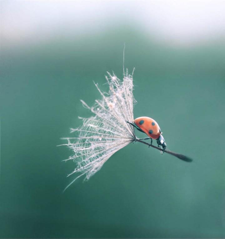 ladybug-landing-with-style