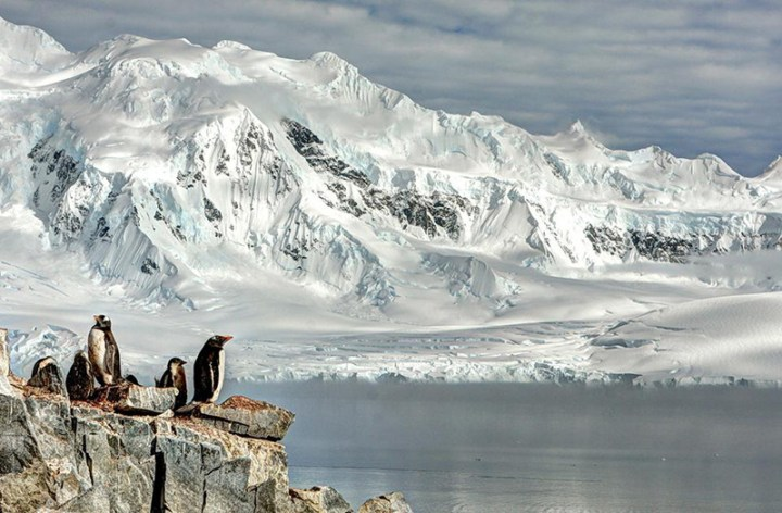 7smithsonian-photo-contest-naturalworld-bird-penguins-arctic-glacier-neal-piper
