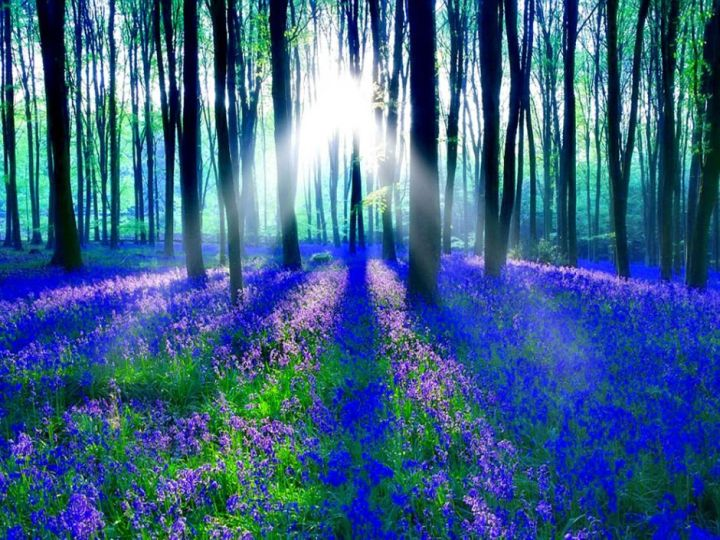 "Sunlight on the enchanted forest. The symbolic meaning of bluebells ""have long been symbolic of humility and gratitude. They are associated with constancy, gratitude and everlasting love."" Photo via 1ms"