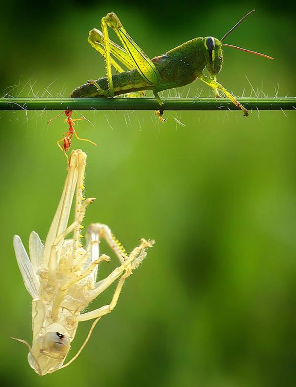bug_doubler_03