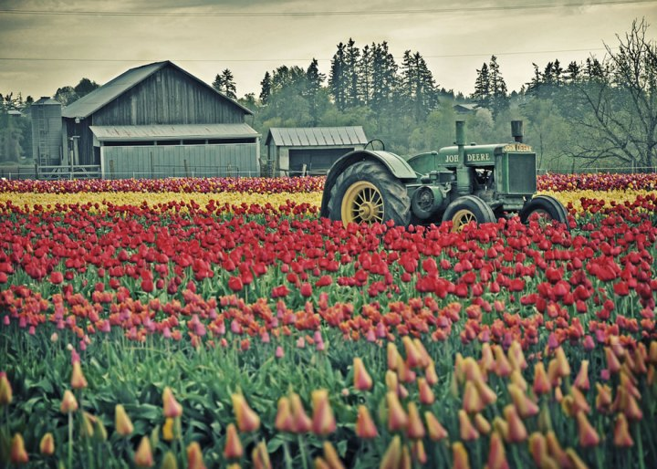 John Deere tractor parked in the Oregon tulip fields. Photo  by Misserion