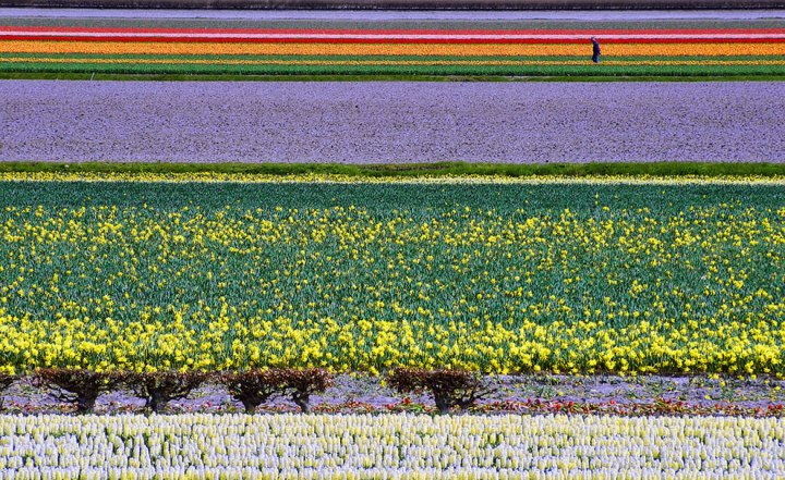 "Dutch Color Fields. The photographer noted, ""Flower fields in North-Holland comprising various blossoming flower species."" Photo by Peter Femto"