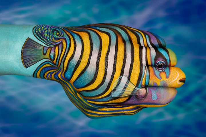 Tropical-Fish-2