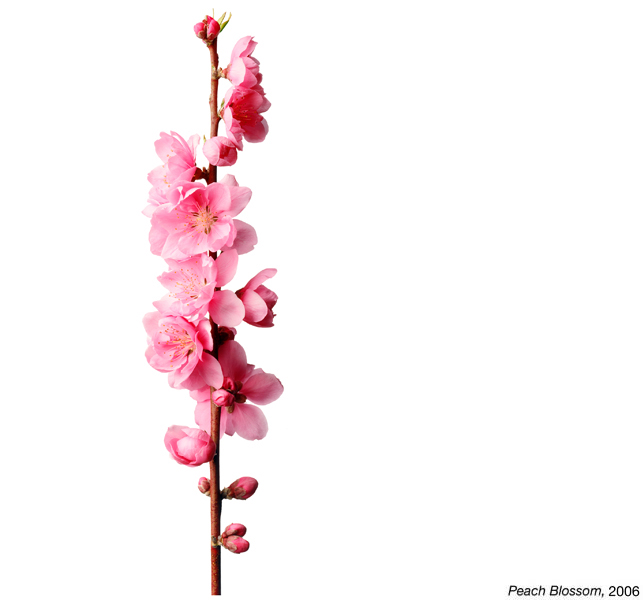 flowerimg_22