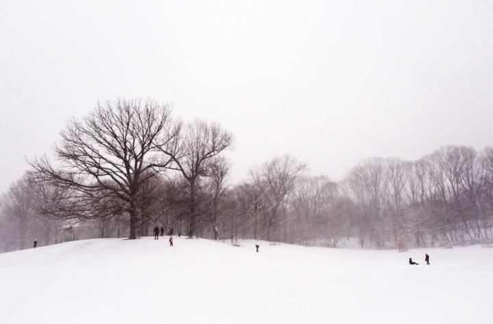 blizzard5
