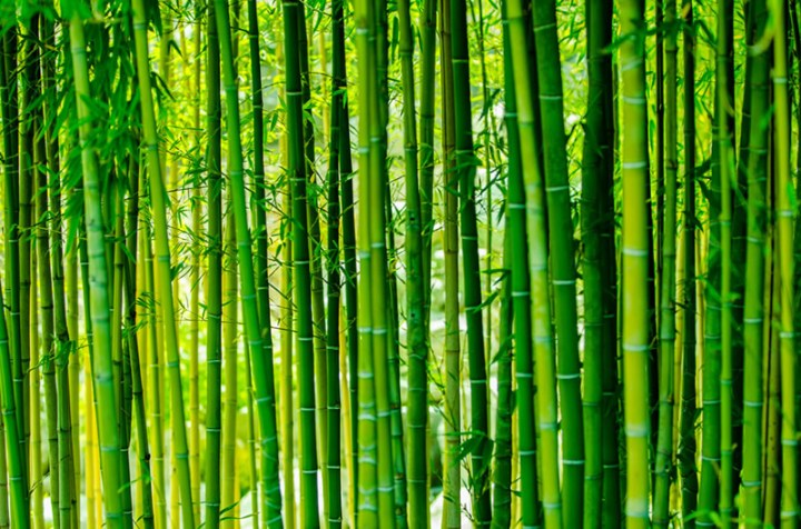 Bright-green-bamboo-forest
