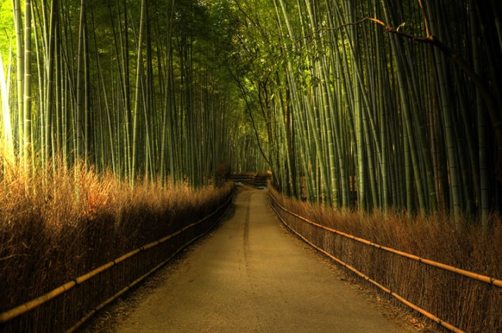 The-bamboo-forest-in-Kyoto-at-the-Arashiyama-area