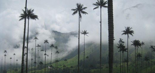 the-cocora-valley-9