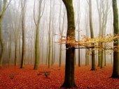 barwy_jesieni_nr2