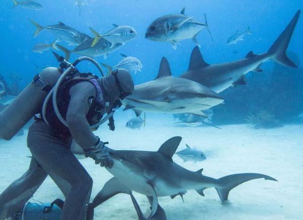 incredible_moment_shark_whisperer_hypnotises_deadly_shark_15_minutes_04
