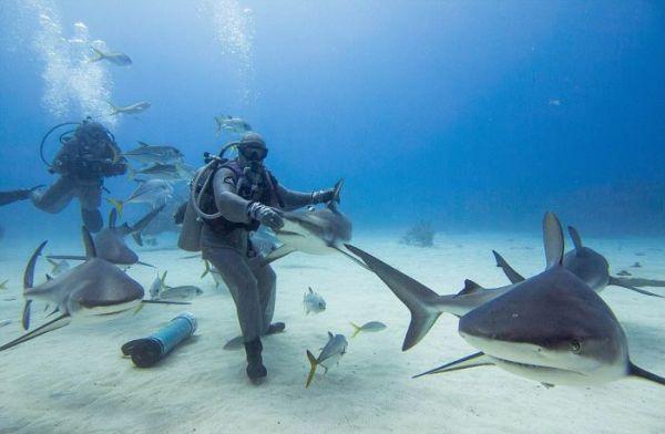 incredible_moment_shark_whisperer_hypnotises_deadly_shark_15_minutes_05