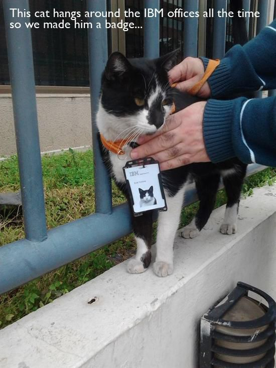 pet_owners_who_should_get_medals_for_being_awesome_15