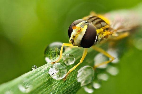 amazing-macro-photography-1