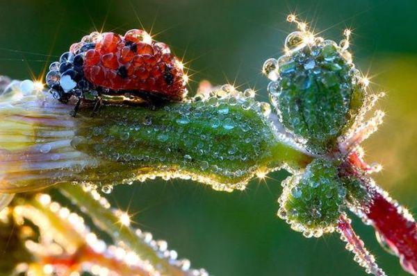 amazing-macro-photography-32