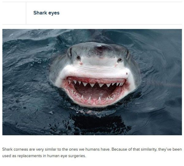 crazy_facts_about_your_eyes_24