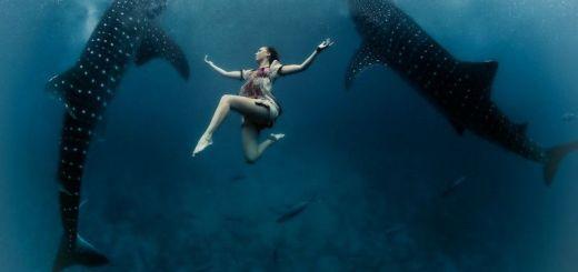 underwater-photos-whale-shark
