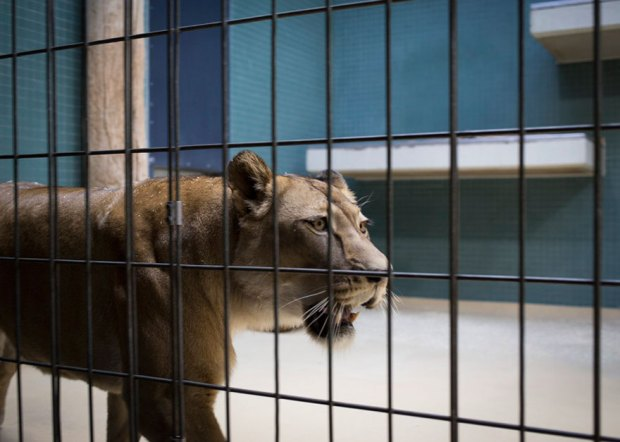 Lost-Behind-Bars-Photos-Zoo-Animals-Elias-Hassos-15