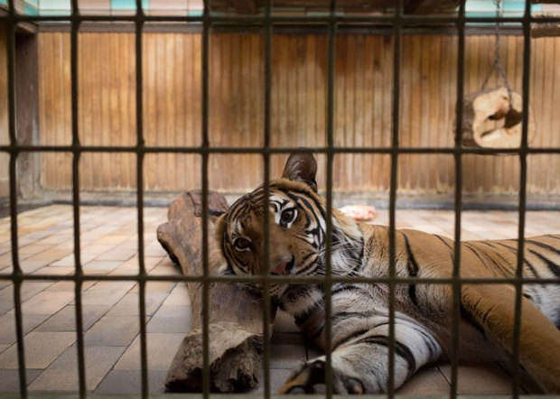 Lost-Behind-Bars-Photos-Zoo-Animals-Elias-Hassos-13