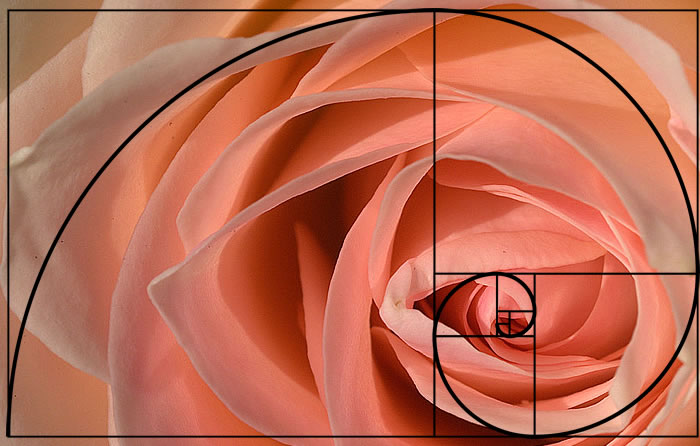 Image result for fibonacci in nature flowers
