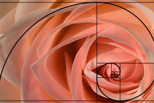 Image result for the fibonacci sequence in nature