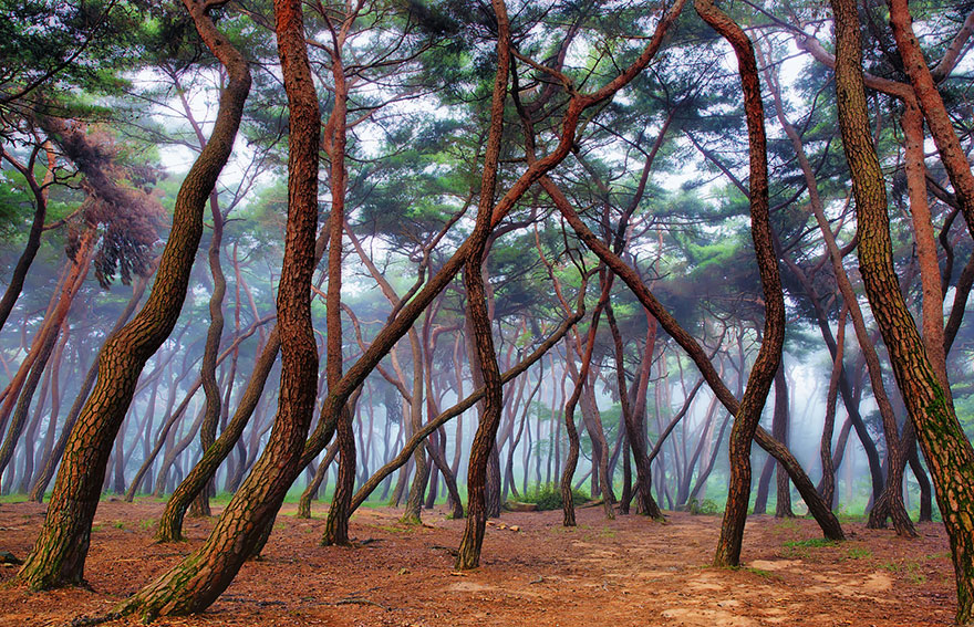 What Are The Most Beautiful And Mysterious Forests In The ...