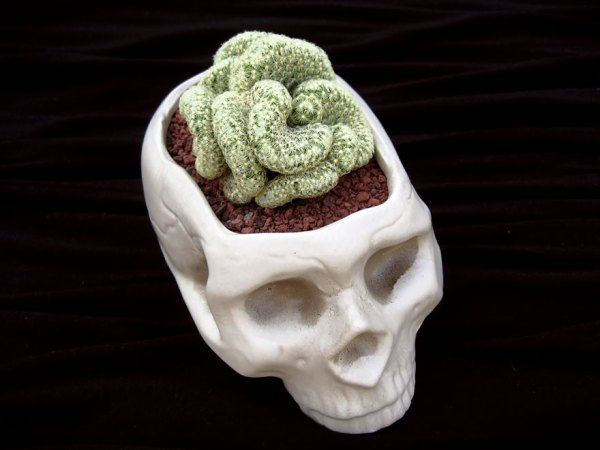 creative-flower-planters-231__880