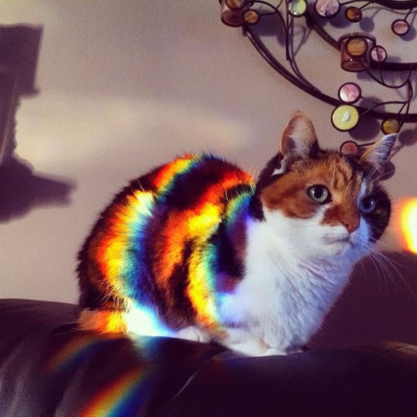 cats-enjoying-warmth-611__605