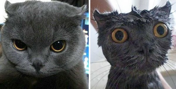 funny-wet-pets-before-after-bath-dogs-cats-11-57288b26c34d3__700