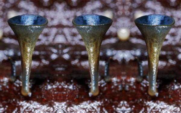 interesting-mushroom-photography-86__880