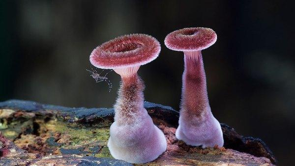 mushroom-photography-171__880