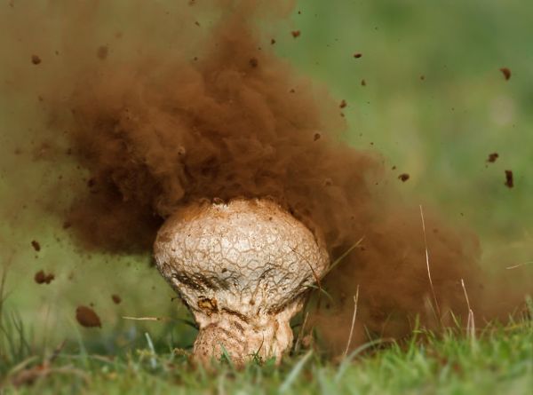 interesting-mushroom-photography-93__880