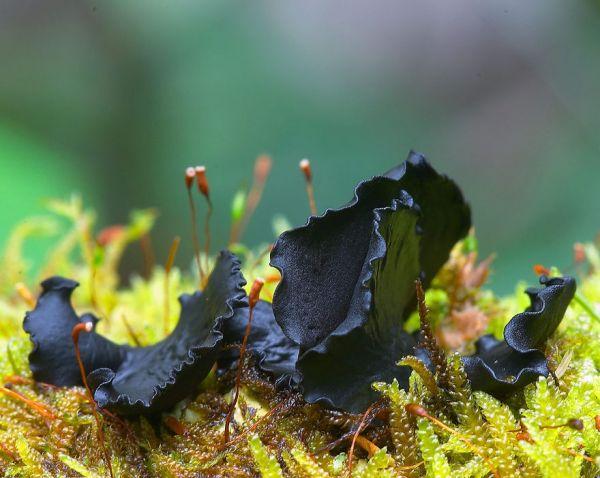 interesting-mushroom-photography-103__880