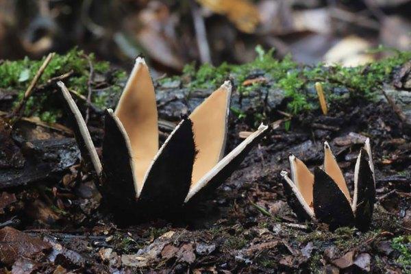 mushroom-photography-181__880