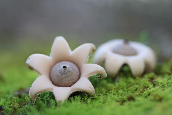 interesting-mushroom-photography-100__880