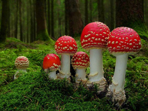 interesting-mushroom-photography-107
