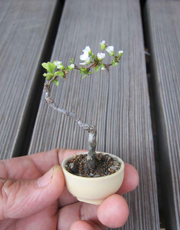 amazing-bonsai-trees-17-5710f169c4f82__700