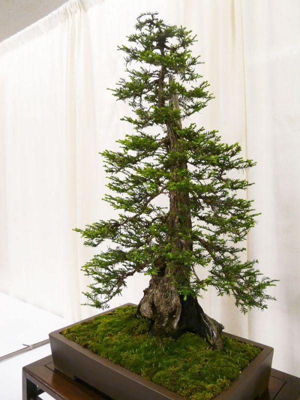 amazing-bonsai-trees-21-5710f36568db7__700