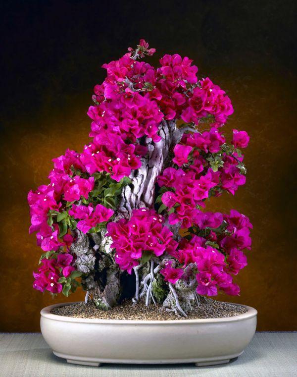 amazing-bonsai-trees-16-5710f113432bb__700
