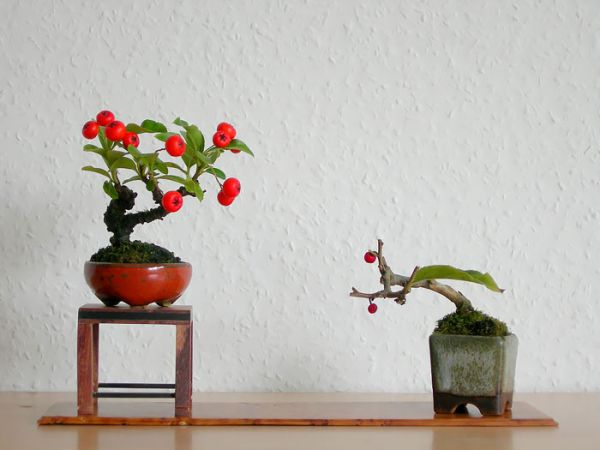 amazing-bonsai-trees-6-1-5710e79f756ee__700