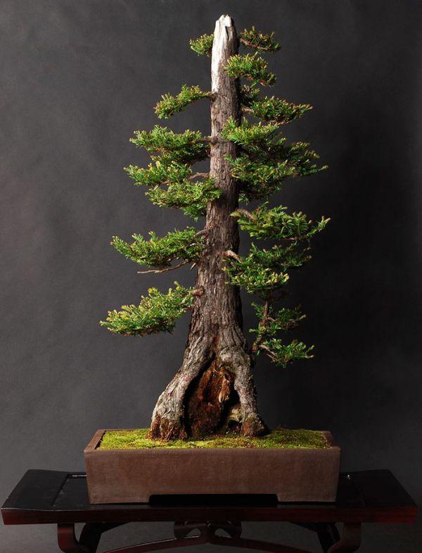 amazing-bonsai-trees-32-5710fb37868f7__700